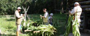 men and women cutting tobacco plants